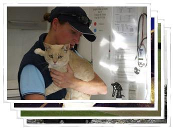 SPCA Canterbury Photographs
